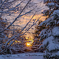 Purple Snow by Karin Pinkham
