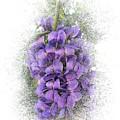 Purple Texas Mountain Laurel Flower Cluster by Patti Deters