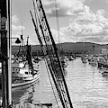 Purse Seiner In Monterey Bay Stella Maris, New Limited 1941 by California Views Archives Mr Pat Hathaway Archives