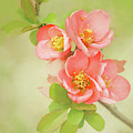 Quatro Quince by Emily Johnson