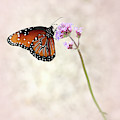 Queen Butterfly In The Pink by Sabrina L Ryan