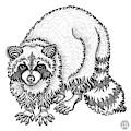 Raccoon by Amy E Fraser