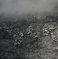 Ragged Mountain Pines In Snow by John Meader