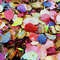 Rainbow Autumn Leaves Painterly by Andee Design