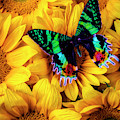 Rainbow Butterfly by Garry Gay