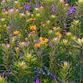 Rainbow Garden by Joel Friedman