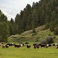 Ranch Horses At Pasture by Kae Cheatham