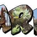 Rarr Big Letter Dinosaurs by Colleen Cornelius