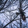 Raven by Bob Orsillo