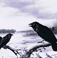 Ravens In Winter by Harry Bright