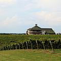 Raylen Vineyards And Winery In Mocksville North Carolina by Jill Lang