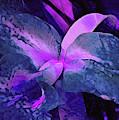 Recombinant Iris 23  by Lynda Lehmann