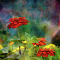 Red And Orange Zinnias 1297 Idp_2 by Steven Ward