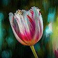 Red And White Tulip #i8 by Leif Sohlman