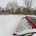 Red Bench In The Snow G0903432 by Michael Thomas