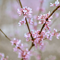Red Buds by Michelle Wermuth