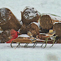Red Cardinal Landing On The Sled by Dan Friend