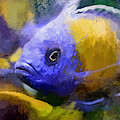 Red Fin Borleyi Cichlid Artwork by Don Northup