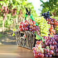 Red Grape And Vineyard by Fatihhoca