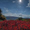 Red Leaves In The Sun by Dan Friend