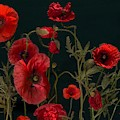 Red Poppies On Black by Shabby Chic and Vintage Art
