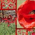 Red Poppy by Linda Vanoudenhaegen