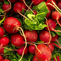 Red Radishes by Nathan Little