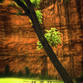 Red Rock Vertigo by Imagery by Charly