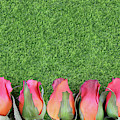 Red Silk Roses And Artificial Green Grass Form A Bottom Border. Good For The Running Of The Thoroughbred Race Called The Kentucky Derby. Copy Space by Perry Correll
