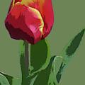 Red Tulip by Deborah Eve Alastra