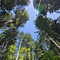 Redwood Sun Flare by Paul Rebmann