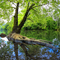 Reflecting The Beauty Of Spring by Debra and Dave Vanderlaan