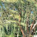 Reflecting Trees by Carol Groenen