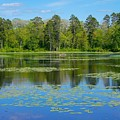 Reflections And Lily Pads by Susan Rydberg
