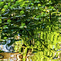 Reflections In Green by Kate Brown