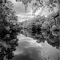 Reflections Of Nature by Elaine Malott