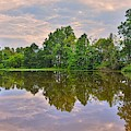 Reflections On A Pond by Lisa Wooten