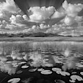 Reflections Over The Marsh In Black And White Dreamscape by Debra and Dave Vanderlaan