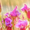 Refreshing Spring Rain by Leland D Howard