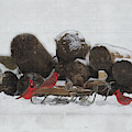 Reunion On The Sled In The Snow by Dan Friend