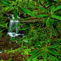 Rhododendron Waterfall by Thomas R Fletcher