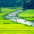 Rice Field And River, Ninhbinh, Vietnam by John Bill