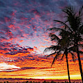 Rich Pastel Palm Sunrise Delray Beach Florida by Lawrence S Richardson Jr