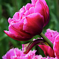 Rising Up - Flower Art by Jordan Blackstone