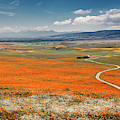 Road Through The Wildflowers by Endre Balogh