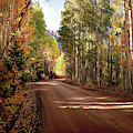 Road To Gothic Autumn Aspens By Olena Art by OLena Art Brand