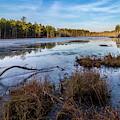Roberts Branch Pine Lands by Louis Dallara