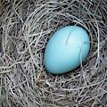 Robin's Egg by Edward Fielding