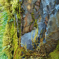 Rock, Moss, And Ferns by Lisa Redfern