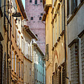 Rooftop Garden Lucca Italy by Joan Carroll